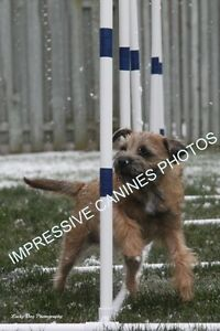 Agility, Obedience, RallyO, Scent Detection and much more!! Kitchener / Waterloo Kitchener Area image 2