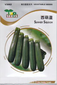 Zucchini Summer Squash Seeds for SALE!  FREE SHIPPING