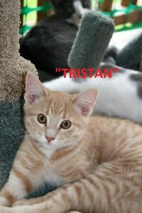 LETHBRIDGE & DISTRICT HUMANE SOCIETY *60 ADOPTABLE KITTENS/CATS