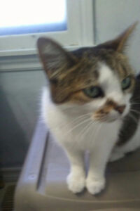 Found Young Female Cat Welland ave and Grantham Area