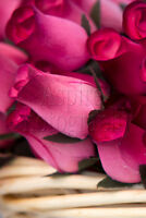Beautiful Wooden Rose Buds
