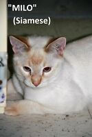 LETHBRIDGE & DISTRICT HUMANE SOCIETY - FULL OF ADOPTABLE CATS