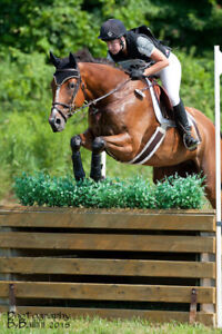 Bomb Proof Eventing THB, 12 year old Gelding