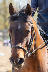 Horse Riding Lessons - Lambton County