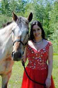 Appaloosa Gelding for sale Prince George British Columbia image 3