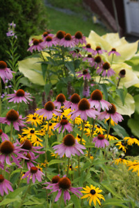 Annual Plant Sale, Scott Manor House Saturday May 19th
