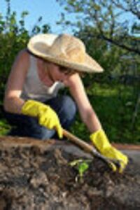 Lawn and Gardening Services