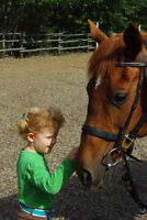 Passion For Horses? Volunteers Needed for Spring!