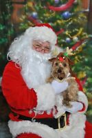 Christmas and Santa Pet Photos