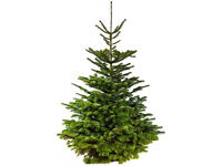 Real Christmas Trees For Sale DY4 7PP