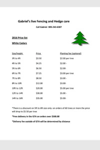 WHITE CEDARS! GREAT PRICES