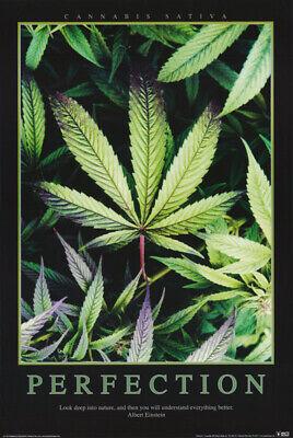 ORGANIC CANNABIS HOME GROWN WEED POSTER 24x36-420 MARIJUANA SMOKING 810