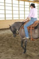 BEAUTIFUL QH CROSS GELDING