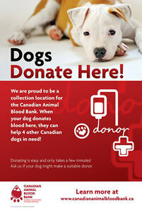 PET BLOOD DONATIONS so that lives can be saved