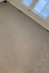 Clean Spotless Beige Neutral Colour Carpet