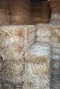 !! SMALL SQUARE STRAW BALES CLEAN AND DRY !!