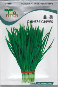 Chinese Chives, Garlic Chives Seeds for SALE!  Free Shipping