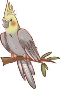 Male cockatiel (150 or rehome)