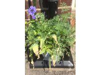 Grate Cover Planter