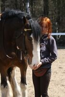Selection of horses for sale
