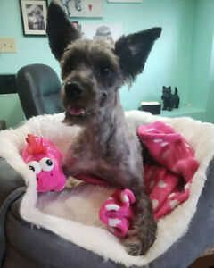 Gracie - young adult terrier mix