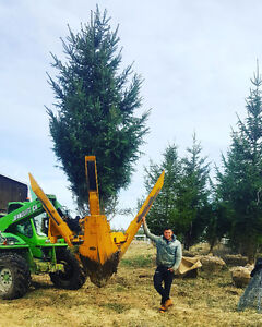 10-20 FT White Pines, Norway Spruce, Blue Spruce