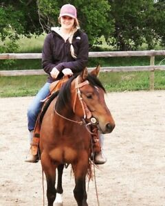 3 year old AQHA bay mare well started