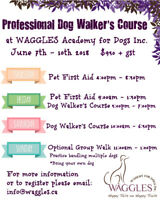 Professional Dog Walkers Course