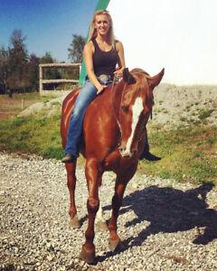 Horse Training!