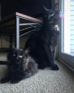 Two Male Cats Looking For A New Home