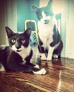 Cat Care and House Sitting Services