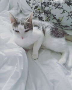 3yr Female Cat for Rehome