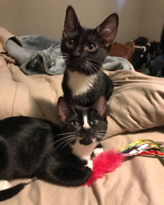 2 kittens 8 months old
