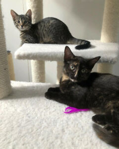 Female kittens for ADOPTION!