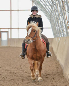 Lovely pony for Riding lessons :) Kitchener / Waterloo Kitchener Area image 1