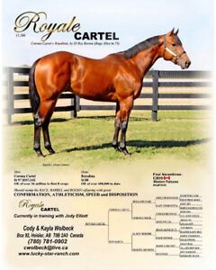 2011 OWN SON OF CORONA CARTEL AT STUD! CBHI/SUPER STAKES