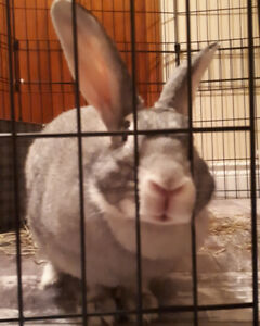 Bunny who needs a committed home