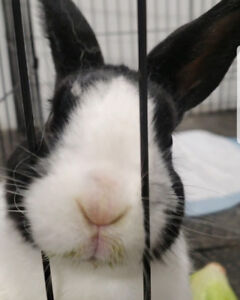 Lovely bunny in need of rehoming