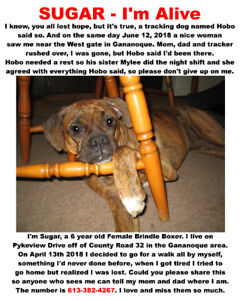 Lost Dog -  Female Brindle Boxer - SUGAR