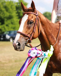 Amateur friendly horse looking for a part boarder!