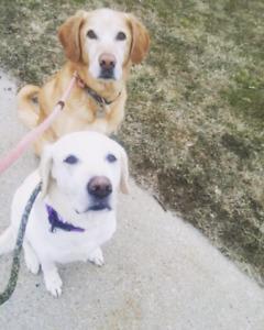 Dog walker/pet Nanny available