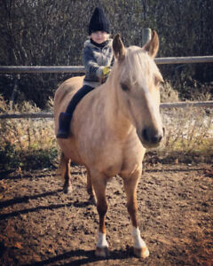 Welsh Mare For Lease