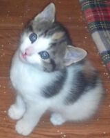 Cat/Kitten sitting and other pets-Bradford,Barrie,Newmarket area