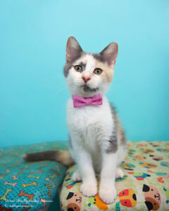 Kitten Up For Adoption By Rescue