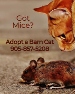 Barn Cats Available for Adoption