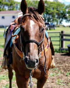 10 y/o Finished Ranch/Cow Horse