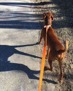 Hamilton Dog Walking & Drop-In / Animal Playtime Services