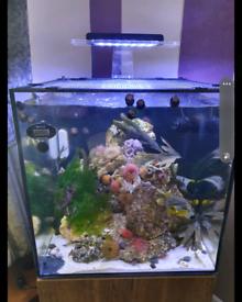Marine aquariums for sale