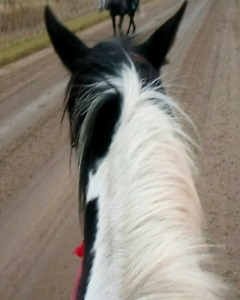 ISO horses to ride