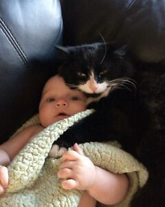 Lost black and white medium haired cat, Vanier Sector of Aylmer
